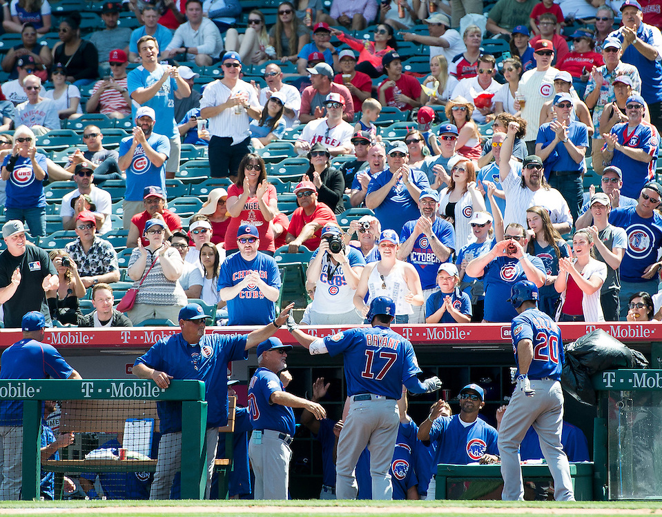 The Cubs' Kris Bryant is welcomed into the dugout after his two-run shot in the sixth off of Angels reliever Lucas Luetge during their preseason game at Angel Stadium Sunday.<br /> <br /> <br /> ///ADDITIONAL INFO:   <br /> <br /> angels.0404.kjs  ---  Photo by KEVIN SULLIVAN / Orange County Register  --  4/3/16<br /> <br /> The Los Angeles Angels take on the Chicago Cubs at Angel Stadium during a preseason game at Angel Stadium Sunday.<br /> <br /> <br />  4/3/16