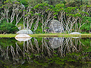 "Trees reflect in the tannin-stained water of Tidal River at Wilson's Promontory National Park in the Gippsland region of Victoria, Australia. Natural tannins leached from decomposing vegetation turn the water brown. Drive two hours from Melbourne to reach Wilson's Promontory, or ""the Prom,"" which offers natural estuaries, cool fern gullies, magnificent and secluded beaches, striking rock formations, and abundant wildlife."