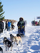 Merlin Coy of Iron River, WI sets off on his ten-dog class sled race on Sunday, 2 Feb 2014. Scenes from the Apostle Islands Sled Dog Race, hosted by the Bayfield Chamber of Commerce, near Bayfield, WI
