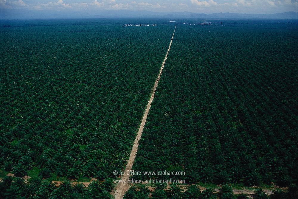 Oil Palm Plantation, Sumatra, Indonesia.