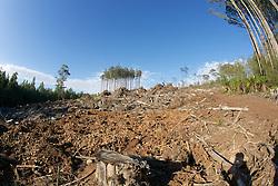 Logging Coupe With Habitat Island