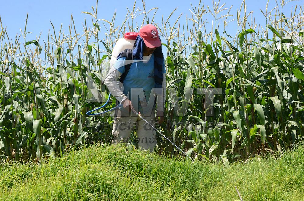 Toluca, México (Julio 29, 2016).- Un hombre cuida su cosecha en San Antonio Buenavista, Toluca, para que no crezca la hierba que daña su cultivo de maíz.  Agencia MVT / José Hernández