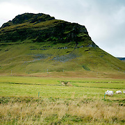 Sheep at Iceland's countryside