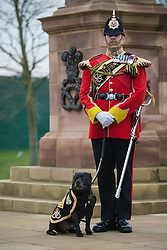 © Licensed to London News Pictures. 27/02/2016. <br /> <br /> Pictured: Warrant Officer Class 2 Greg Hedges, Mascot Handler, with the Regimental Mascot, of The Staffordshire Regiment, Sergeant Watchman The Fifth at the Operation Granby Service at The National Memorial Arboretum on Saturday 27th February 2016.<br /> <br /> A service has been held at The National Memorial Arboretum on Saturday 27th February 2016 to commemorate The Stafford Regiments participation in Operation Granby, a British military operation held in 1991 during the first Gulf War in which soldiers helped liberate Kuwait from Iraqi occupation ordered by Saddam Hussain.    <br /> <br /> Two Staffordshire Regiment soldiers, Private Carl Moult and Private Shaun Taylor were killed in Operation Granby.<br /> <br />  Photo credit should read Max Bryan/LNP