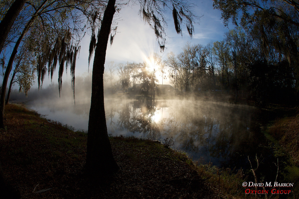 Trees and Pond with Morning Light
