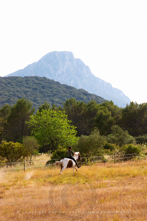 The Pic St Loup mountain top peak. Pic St Loup. Languedoc. Horses running free in a field. France. Europe.