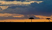 Maasai Mara sunset.