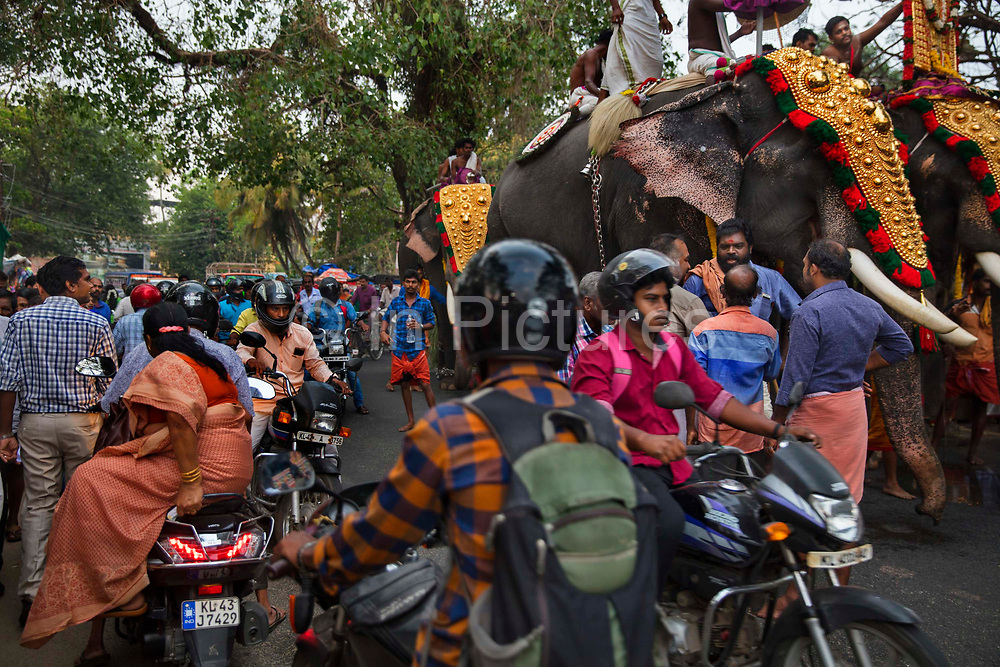Elephants walking through a busy intersection during a Hindu spring festival on 28th February 2018 near Kovalam, Kerala, India. Hindu and Buddhist traditions give elephants an elevated status. Hindus revere elephants as an incarnation of elephant god Ganesha, the Lord of luck and prosperity.