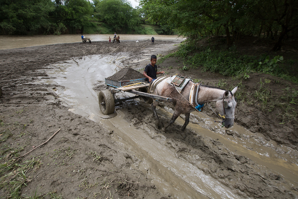 Men dig sand by hand on the Carepa River, Urabá. Horse-drawn carts and lorries are loaded with river sand and sold for local building work. These small artisanal operations are incomparable to the industrial removal of sand up-river where 200 lorry-loads are removed daily to be used on large infrastructure projects like highways. The large-scale mining of sand changes the speed and course of the river, creating environmental problems and danger for people who live near the river as it changes course. Near Carepa city, the river has changed course by 100m in recent years, taking houses with it. Currently it is just a few metres from housing and moving closer daily.