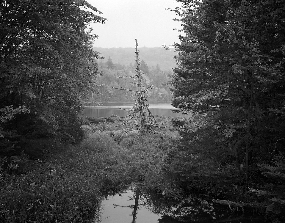 A lone tree on the shore of Cameron Lakes in Nova Scotia