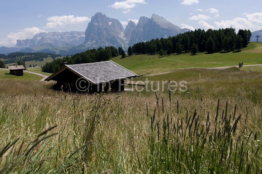 Alpine huts on the Siusi plateau, above the South Tyrolean town of Ortisei-Sankt Ulrich in the Dolomites, Italy. The Alpe di Siusi is the biggest high-alpine pasture in Europe with a surface of 57 km² and its altitude range from 1680 to 2350 m above sea level. This high-alpine pasture is located in the heart of the Dolomites. A mostly older generation of farmers work the land in this high area, known for its summer hiking trails and skiing pistes.