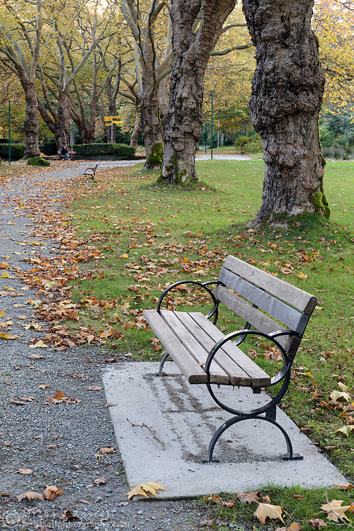 A Park bench among the London Plane Trees along a path from Lumberman's Arch to the Japanese Canadian War Memorial.  Photographed at Stanley Park in Vancouver, British Columbia, Canada.