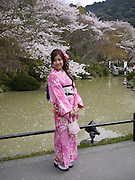Japan, Honshu, Kyoto, Kiyomizu-Dera temple, Japanese woman in traditional Kimono stands in front of Cherry Blossoms