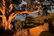 Early morning and sunrize in Lake Manyara National Park, Tanzania.