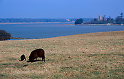 A87DHD View from fields over River Alde looking towards Iken Suffolk England