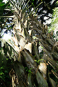Lyon Arboreteum, Manoa Valley, Honolulu, Oahu, Hawaii