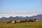 Horse riding in Southern Iceland. The Highland plateau with mountain and glaciers in the background. The loose (riderless) horses travel with the riders to enable changing horses when neccessary.
