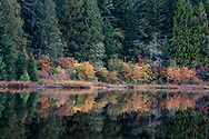 Fall foliage reflecting in Rolley Lake at Rolley Lake Provincial Park, Mission, British Columbia, Canada