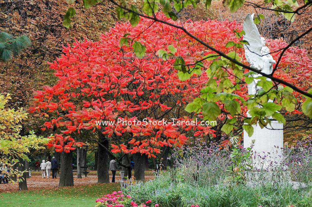 France, Paris colourful autumn leaves in a park