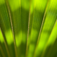 close-up of palm frond with backlighting