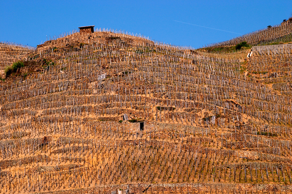 Very steep hills and terraces with lots of wooden supporting sticks. Terraced vineyards in the Cote Rotie district around Ampuis in northern Rhone planted with the Syrah grape. Ampuis, Cote Rotie, Rhone, France, Europe