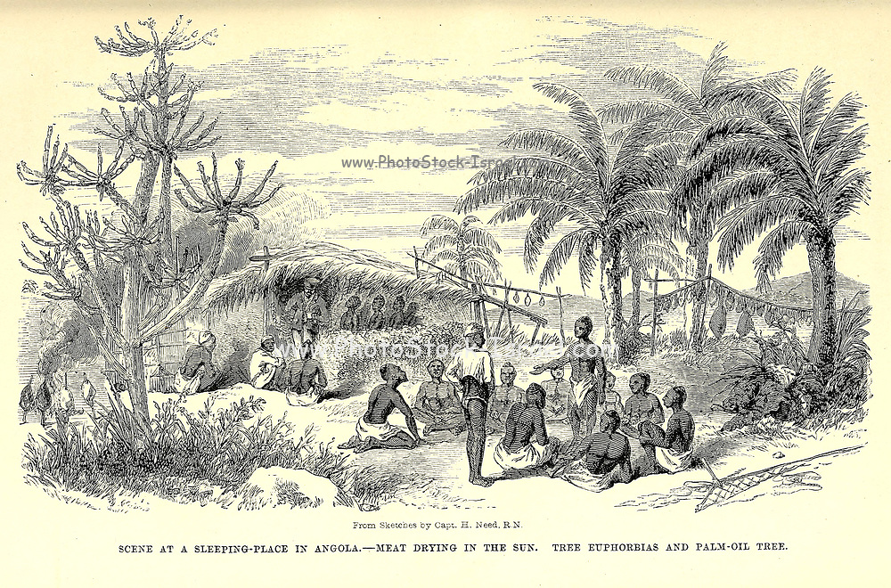 Scene at a Sleeping Place in Angola. Meat drying in the sun. Tree Euphorbias and Palm-Oil tree. From book ' Missionary travels and researches in South Africa : including a sketch of sixteen years' residence in the interior of Africa, and a journey from the Cape of Good Hope to Loanda, on the west coast, thence across the continent, down the river Zambesi, to the eastern ocean ' by David Livingstone Published in London in 1857