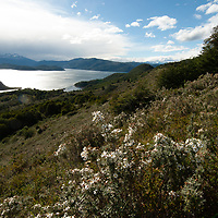 Flowers and southern beech forests above Wulaia Bay on Navarino Island, Tierra del Fuego, Chile.  Murray Channel and Hoste Island are in background.