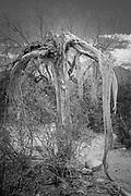 Saguaro people - Worn out
