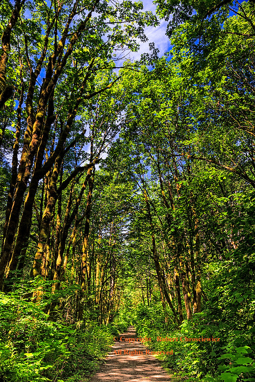 Path to Summer: A path cuts a lazy path through the rich, lush, forest canopy, near to Hope British Columbia Canada.