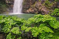 Potem Falls, along the Pit River arm of Shasta Lake, Shasta - Trinity National Forest, Shasta County, California