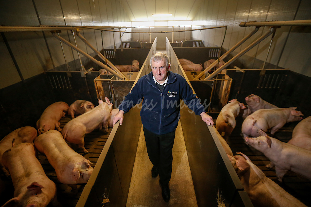 """Belgian farmer  Alfons Gios during the DG AGRI Study trip to Belgium """"The CAP and Innovation"""". Visit of Alfons Gios' pig farm in Herenthout November 27, 2013.  Photo : Thierry Roge © European Union"""