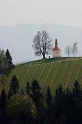 Demmerkogel. A chapel and oaktree starring on the label of Buschenschank Gerngross' wines.