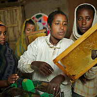 "Wubalem (second right) and neighbours load racks taken from a modern hive into a centrifuge that will separate the honey from the wax. The racks, complete with wax, will then be replaced in the hive. <br /> <br /> Wubalem Shiferaw, age 23, lives in the village of Mecha with her husband Tsega Bekele, age 33, and their daughter Rekebki, age 4. Wubalem remembers her grandparents harvesting honey. She has maintained this tradition while moving to modern hives which produce a far greater yield of honey. Wubalem is a member of the Mecha village Cooperative which brings together local women beekeepers allowing them to share insights and build a credit union. The Mecha village Cooperative is not yet a member of the Zembaba Union. Wubalem's husband Tsega is a priest and a tailor. <br /> <br /> Harvesting honey supplements the income of small farmers in the Ethiopian region of Amhara where there is a long tradition of honey production. However, without the resources to properly invest in production and the continued use of of traditional, low-yielding hives, farmers have not been able to reap proper reward for their labour. <br /> <br /> The formation of the Zembaba Bee Products Development and Marketing Cooperative Union is an attempt to realize the potential of honey production in Amhara and ensure that the benefits reach small producers. <br /> <br /> By providing modern, high-yield hives, protective equipment and training to beekeepers, the Cooperative Union helps increase production and secure a steady supply of honey for which there is growing demand both in and beyond Ethiopia. The collective processing, marketing and distribution of Zembaba's ""Amar"" honey means that profits stay within the cooperative network of 3,500 beekeepers rather than being passed onto brokers and agents. The Union has signed an agreement with the multinational Ambrosia group to supply honey to the export market. <br /> <br /> Zembaba Bee Products Development and Marketing Cooperative Union also provides credit to individual members and trains carpenters"