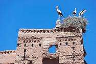 Storks on top of the Stork Kasbah in Ouarzazate (Kasbah des Cigognes) against clear blue sky.
