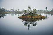 Small floating island mirroring in bog pool water, Kemeri National Park (Ķemeru Nacionālais parks), Latvia Ⓒ Davis Ulands   davisulands.com