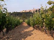 Vineyard at Cadière d'Azur, near Bandol, France