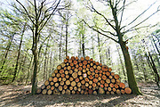 Nederland, Groesbeek, 18-04-2019Afgelopen weken zijn er in de bossen rond Groesbeek veel bomen gekapt . Met harvesters, machines die de bomen in een keer kunnen zagen, onttakken en in stukken verdelen, worden open plekken in het bos gemaakt. De grond wordt omgewoeld en stronken uitgefreesd. Staatsbosbeheer en natuurmonumenten noemen dit oogsten van hout noodzakelijk om de biodiversiteit in de bossen te herstellen en ruimte te geven voor andere soorten flora en fauna, planten en dieren. Er is veel kritiek op het grootschalig kappen van bomen in de bossen.Foto: Flip Franssen