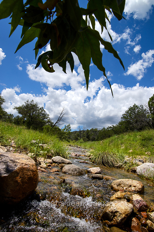 A stream flows in July in the grasslands along Gardner Canyon Road, north of Sonoita, Arizona, USA.