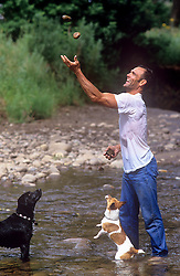 man throwing stones up in the air as two dogs look on in a stream