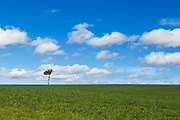 Single tree at top of pasture field under blue sky with cumulus clouds near Yass, New South Wales <br />