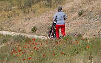 DOMBURG -  klaprozen,  Domburgsche Golf Club in Zeeland (Walcheren) .  COPYRIGHT KOEN SUYK