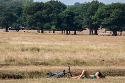 © Licensed to London News Pictures. 10/08/2020. London, UK. A sunbather relaxes in the grass at Richmond Park in South West London which is normally a vibrant green has turned to a golden straw colour as the tropical heatwave continues to hit the South East of England with temperatures in excess of 34c for the next few days giving way to thunderstorms on Thursday. Photo credit: Alex Lentati/LNP