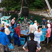 Sorting through the morning catch in the small fishing port of Futo Harbor