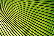 """Abstract patterns of shadow and light on bright green tropical palm fronds and leaves. - To license this image, click on the shopping cart below - -- Determine pricing and license this image, simply by clicking """"Add To Cart"""" below --"""