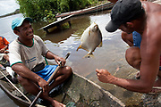 Local fishermen looking at some of the day's catch. A third of Altamira in the state of Para, Brazil will be flooded to make way for the Belo Monte dam, nearly all the people affected are the poorest in society or indigenous communities that will have nowhere to go if they were made homeless, and the Government payoff for their properties is low therefore making it difficult to find new accomodation. At present, the Arara land is protected from development, sale or new residents as it has been their ancestral land for hundreds of years, this is now one of the key areas under threat