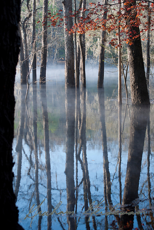 Reflections on the flooded Suwannee River, Florida.