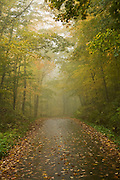 Leaves cover road through misty trees