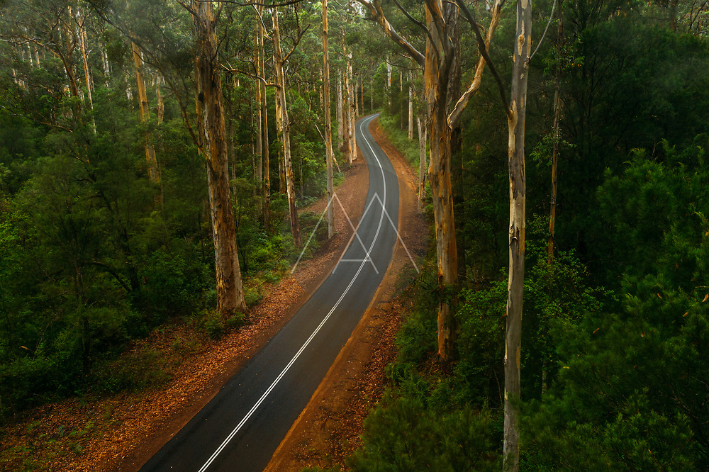 Aerial view of winding road through the forest in the Greater Beedleup National Park, Western Australia, Australia.