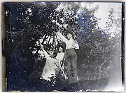 children picking fruit 1900s glass plate