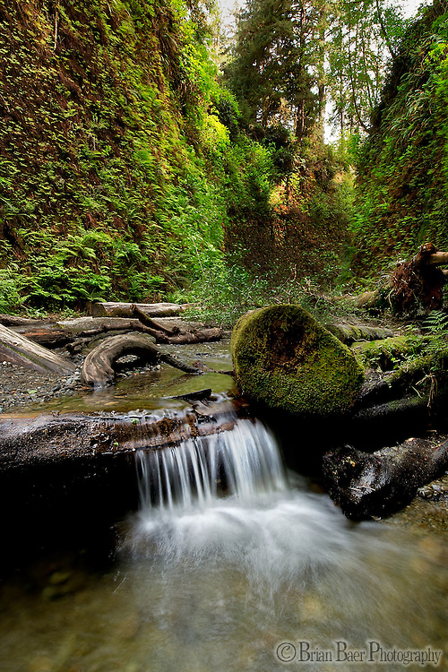 090-P83360<br /> <br /> Prairie Creek Redwoods State Park<br /> ©2014, California State Parks<br /> Photo by Brian Baer